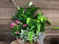 Blooming-Dish-Garden