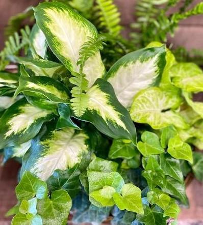 asst green plant